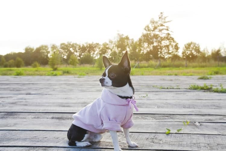 The 25 Best Dog Hoodies of 2019 - Pet Life Today